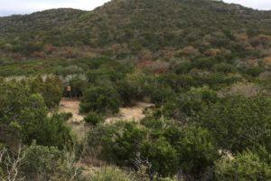 Sign up now!  Hunt: Uvalde, TX at Hermanos Ranch